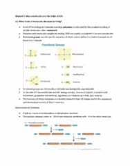 chapter-3-study-guide