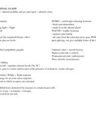 study-notes-for-lecture-five-adrenal-gland