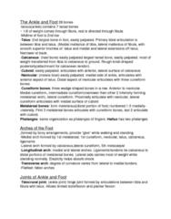 PEDS100 Chapter Notes -Metatarsal Bones, Cuneiform Bones, Navicular Bone