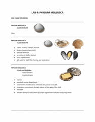 Lab 4 Side Specimens with description and picture for each specimen described.