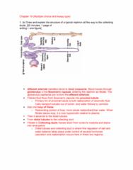 BPK 205 Chapter Notes -Renal Function, Macula Densa, Afferent Arterioles