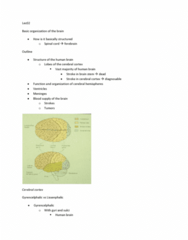 PSYB65H3 Lecture Notes - Lateral Sulcus, Postcentral Gyrus, Frontal Lobe
