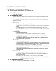 PSYC 3450 Lecture Notes - Dorsal Root Ganglion, Neural Crest, Dura Mater