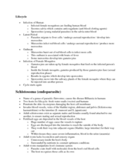 BIOL 1003 Lecture Notes - Schistosomiasis, Anemia