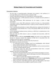biology-chapter-16-transcription-and-translation-docx