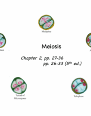 17. Meiosis & gametogenesis.pdf