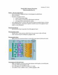 phototransduction-1-docx