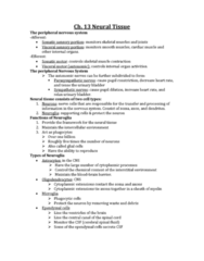 ch13-neural-tissue-lecture-notes-docx