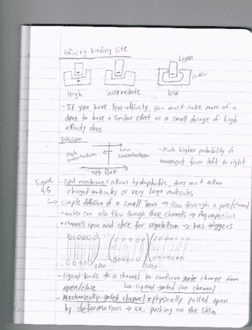 systems-physiology-lecture-9