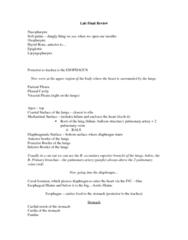 KNES 260 Study Guide - Final Guide: Greater Omentum, Pharynx, Epiglottis