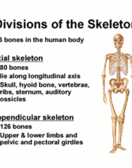 KINESIOL 1A03 Lecture Notes - Lecture 14: Acromioclavicular Joint, Sternoclavicular Joint, Epicondyle