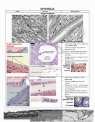 BELLRINGER notes 1 2014.pdf