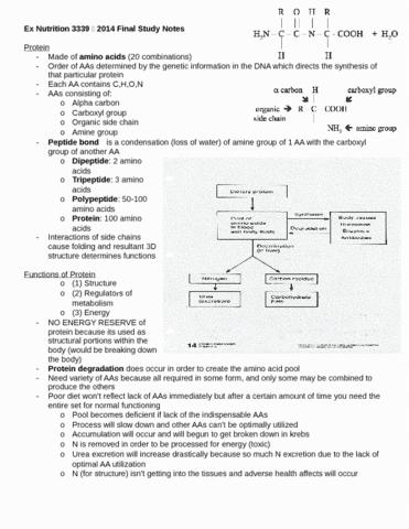 kinesiology-3339a-b-midterm-kin-3339-final-study-notes-docx