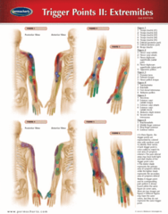 Permachart - Marketing Reference Guide: Extensor Carpi Ulnaris Muscle, Flexor Pollicis Longus Muscle, Abductor Digiti Minimi Muscle Of Hand
