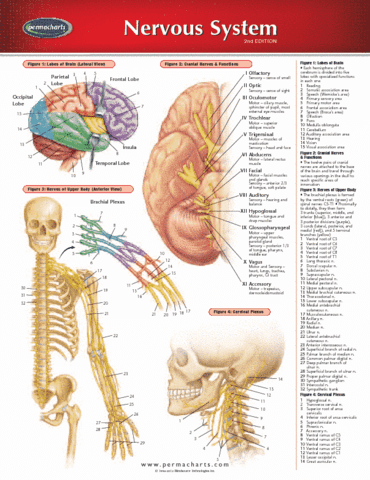 nervous-system-reference-guides