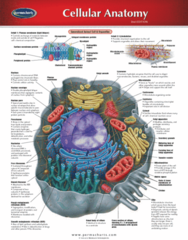 Permachart - Marketing Reference Guide: Endoplasmic Reticulum, Integral Membrane Protein, Nuclear Membrane