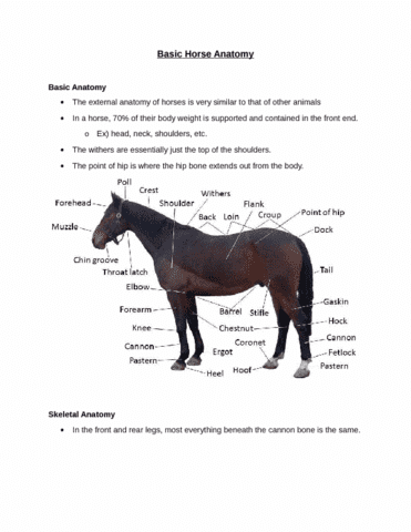 Ans 3216 Lecture 36 Equine Diseases Oneclass