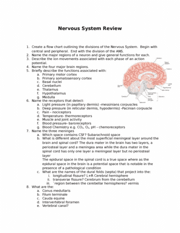 Hdp401 Quiz Nervous System Review Oneclass