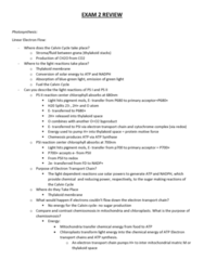 01:119:115 Study Guide - Midterm Guide: Transfer Rna, Primase, Zygosity