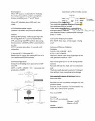 APA 2312 Lecture Notes - Lecture 7: Oxidative Phosphorylation, Phosphorylation, Phosphocreatine