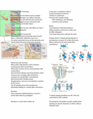 APA 2312 Lecture Notes - Lecture 5: Skeletal Muscle, Endoplasmic Reticulum, University Of Manchester