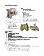 ANTH 1120 Study Guide - Midterm Guide: Awash, Ethiopia, Canine Tooth, Paranthropus Robustus
