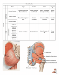 Health Sciences 2300A/B Study Guide - Final Guide: Fn Minimi, Anatomical Terms Of Location, Interossei