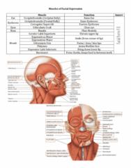 Health Sciences 2300A/B Study Guide - Final Guide: Thyrohyoid Muscle, Parietal Bone, Aponeurosis