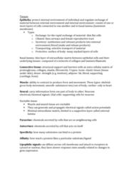 BIOL273 Chapter Notes - Chapter 1: Basal Lamina, Adipose Tissue, Elastic Fiber