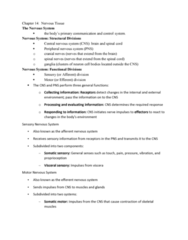 BIOL 205 Lecture Notes - Lecture 20: Central Nervous System, Axon Hillock, Action Potential