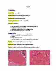 BIOM 4070 Study Guide - Quiz Guide: Ryanodine Receptor, Extraocular Muscles, T-Tubule