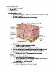 BIOL 1117 Midterm: Anatomy and Physiology exam 2