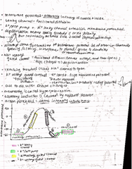 BIOL 21 Lecture Notes - Lecture 27: Active Transport