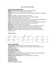 ANTH 203 Study Guide - Quiz Guide: Prognathism, Treeshrew, Acheulean