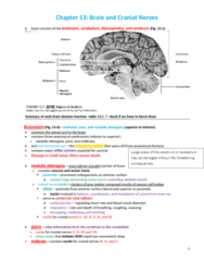 BLG 700 Chapter 13: Chapter 13 - Brain and cranial nerves colorless