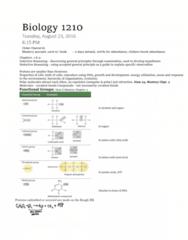BIOL 1210 Study Guide - Final Guide: Okazaki Fragments, Sister Chromatids, Photosystem I