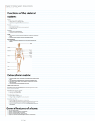 ES 207 Chapter Notes - Chapter 6: Skeleton, Medullary Cavity, Mastoid Part Of The Temporal Bone