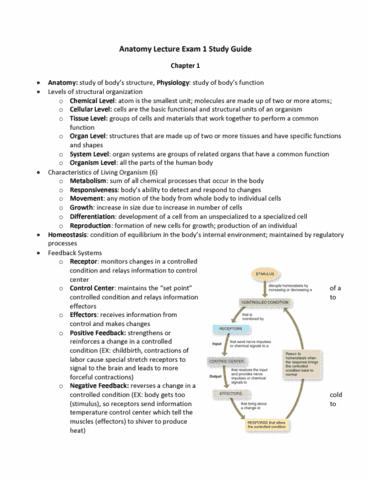 Hsci 3300 Midterm Anatomy Exam 1 Study Guide Oneclass