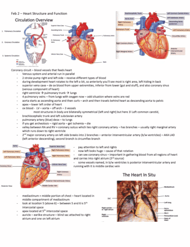 Anatomy and Cell Biology 3319 Lecture 29: Feb 2 – Heart Structure ...