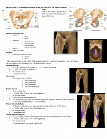Study Guides for Anatomy and Cell Biology 3319 at Western University ...