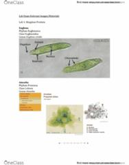 BIOL 2030 Final: Lab Exam Review Part 1