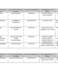 BIOL 205 Quiz: ANATOMY TABLE