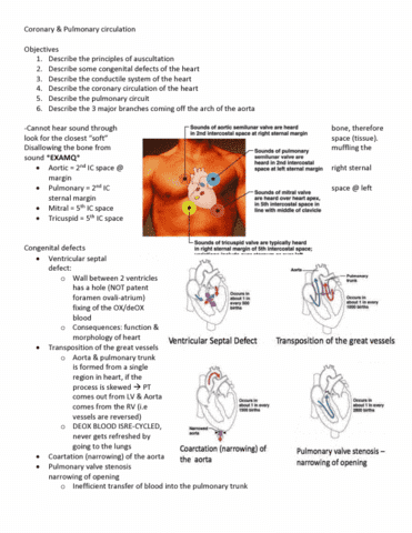 anatomy-and-cell-biology-3319-lecture-6-coronary-pumonary-circulation