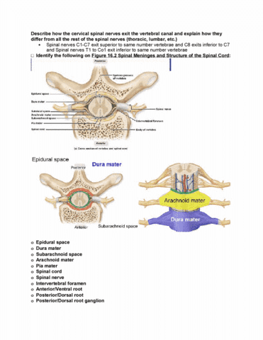 Class Notes for Human Anatomy at Michigan State University - OneClass