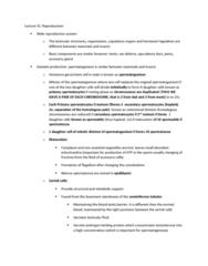 BIOL 3070 Lecture Notes - Lecture 31: Seminiferous Tubule, Seminal Vesicle, Spermatogenesis