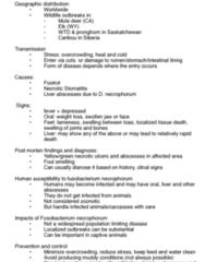 WFSC 301 Lecture Notes - Lecture 18: Stomatitis, Fusobacterium Necrophorum, Zoonosis