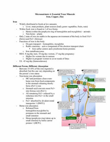 nutr-3210-lecture-20-micronutrients-part-4