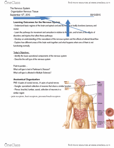 Class Notes for Anatomy and Cell Biology 4461B at Western University ...