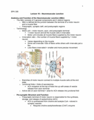 BPK 306 Lecture Notes - Lecture 16: Choline Acetyltransferase, Neuromuscular Junction, Axon Terminal