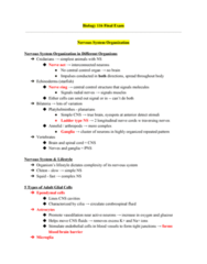 01:119:116 Study Guide - Final Guide: Radial Glial Cell, Autonomic Nervous System, Peripheral Nervous System